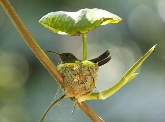 innovative hummingbird